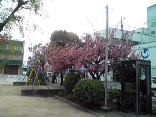 仕事場近くの公園PART2