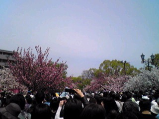 大阪・造幣局、桜の通り抜け