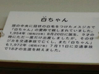 奈良公園の鹿の白ちゃんの話、知っていますか