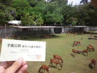 奈良公園・鹿苑の赤ちゃん鹿の公開
